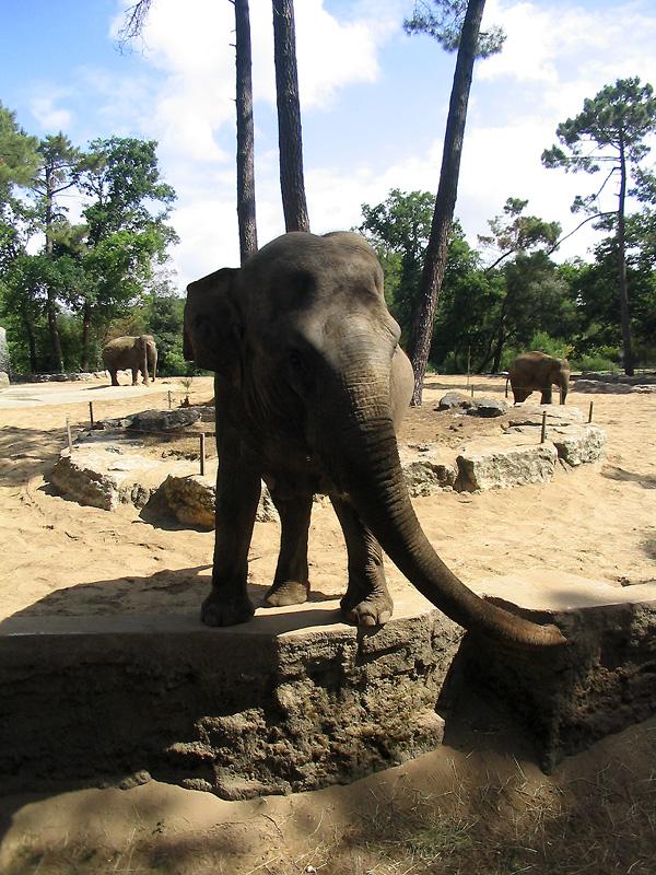 galerie de photographies   en vacances   des animaux